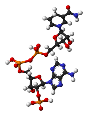 Nicotinamide adenine dinucleotide phosphate