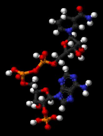 Nicotinamide adenine dinucleotide phosphate - Image: NADPH 3D balls