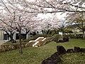 Nara-edu-Sakura.JPG