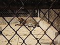 National Zoological Park 460.JPG