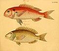 Naturgeschichte in Bildern mit erläuterndem Text (Taf. XC) (6058673273).jpg