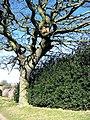 Nesting box for owls, Stotgate Farm - geograph.org.uk - 713172.jpg