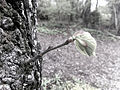 New branch with leaf.jpg