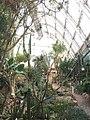 New greenhouse Graz 2.jpg