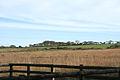 Newton St Petrock, Doves Moor - geograph.org.uk - 590965.jpg