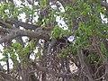 Ngorongoro Conservation Area-107924.jpg