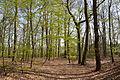 Niedersachsen, Heeßel, Landschaftsschutzgebiet NIK 2719.JPG