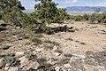 Ninemile Hill - Flickr - aspidoscelis (2).jpg