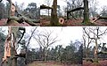 No winter but storms in Holland makes the trees suffer. Here a totally destroyed mighty oaktree at Deelerwoud - panoramio.jpg