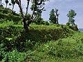 Nuwakot nepal jungle.jpg