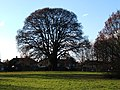Oak tree on edge of Hogsmill Open Space, West Ewell - geograph.org.uk - 95378.jpg