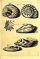 Obseruationes circa viuentia, quæ in rebus non viuentibus reperiuntur - Cum micrographia curiosa siue Rerum minutissimarum obseruationibus, quæ ope microscopij recognitæ ad viuum exprimuntur - his (14760795396).jpg