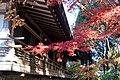 Ohara 2008-11-26 (3261146925).jpg