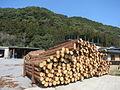 Okazaki-Forest-Association-2.jpg