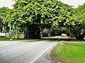 Old Cutler Road 20100321.jpg