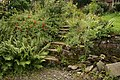 Old steps at Barry Mill. - panoramio.jpg