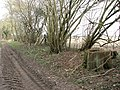 Outgrown hedge beside farm track - geograph.org.uk - 1759429.jpg