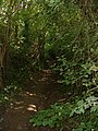 Overgrown bridleway between Tolsford Hill and the A20 - geograph.org.uk - 137040.jpg