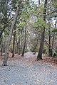 Oxbo Trail, Roswell, GA Nov 2017 2.jpg