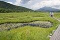 Ozegahara 88.jpg