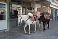 Pack Donkeys, Hydra, Greece (9668853126).jpg