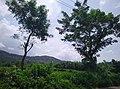Palakkad, Kerala, India - panoramio (2).jpg