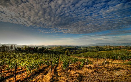 Vineyards in the Chianti region Panorama vicino certaldo.jpg