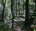 Paramoor Woods - geograph.org.uk - 241738.jpg