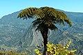 Parc national de la Réunion - Cirque Salazie - Fougère.jpg
