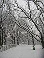 Parco Solari Trees Snow3.jpg