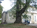 Park w Gumniskach, Tarnów - Gumniska (-) 6 pavw.JPG