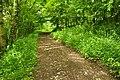 Passage Grove, Tidenham (9649).jpg
