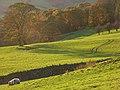Pastures, Lorton - geograph.org.uk - 1041964.jpg