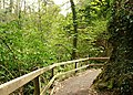 Path, Crawfordsburn Glen (2) - geograph.org.uk - 784984.jpg