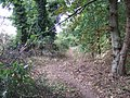 Path in the woods, Snettisham - geograph.org.uk - 1517739.jpg