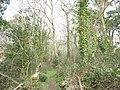 Path through Coed yr Hendy - geograph.org.uk - 374997.jpg