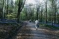 Path through West Woods - geograph.org.uk - 265989.jpg
