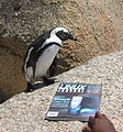 Penguin reading linux journal (5199118888).jpg