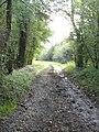 Permissive Bridleway in Farnham Woods - geograph.org.uk - 269179.jpg