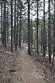 Persephone Nature Trail, Troodos, Cyprus - panoramio (12).jpg
