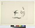 Petit oiseau volant, une branche (NYPL b14506646-1149410).tiff
