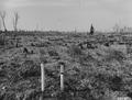 Photograph of Plantation Number 17 in Glidden Ranger District - NARA - 2129285.tif