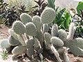 PikiWiki Israel 1703 Israeli plants צמחייה כחול-לבן.jpg