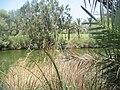 PikiWiki Israel 2699 Yarkon River גדות הירקון.jpg
