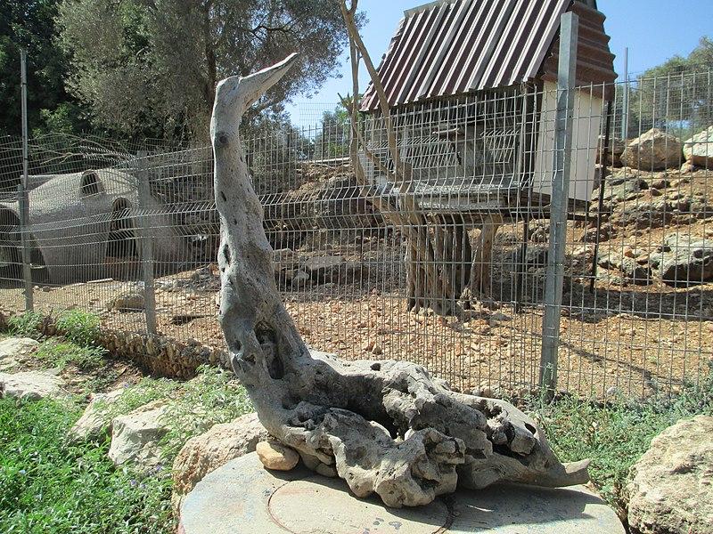 פיסול בעץ בשפיה