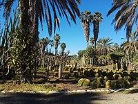 PikiWiki Israel 53352 the cactus garden at ganei yehoshua park.jpg