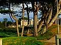 Pines - panoramio (7).jpg