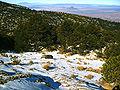 Pinus hartwegii forest Cofre de Perote.jpg