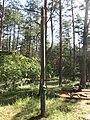 Pirčiupiai 65446, Lithuania - panoramio.jpg