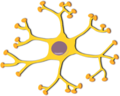 Pixabay neuron.png